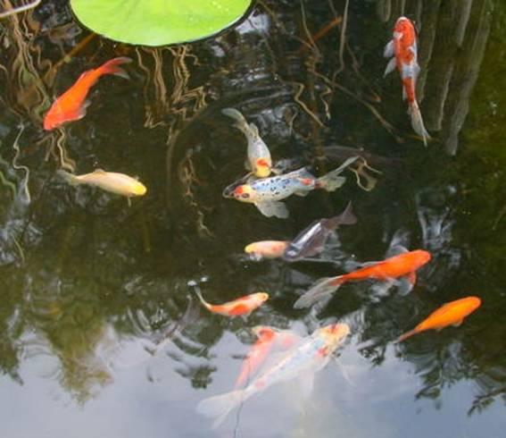 Www for Garten fische